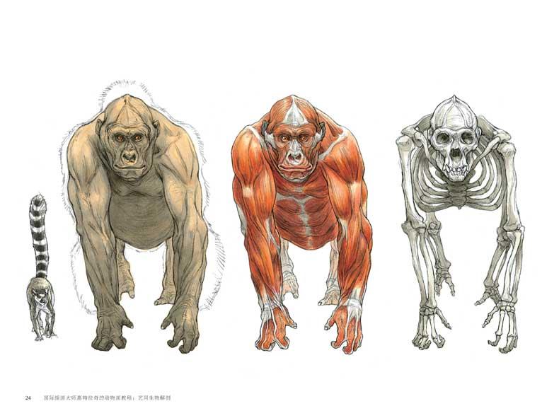 国际插画大师惠特拉奇的动物画教程 艺用生物解剖 动物绘画 动物绘本