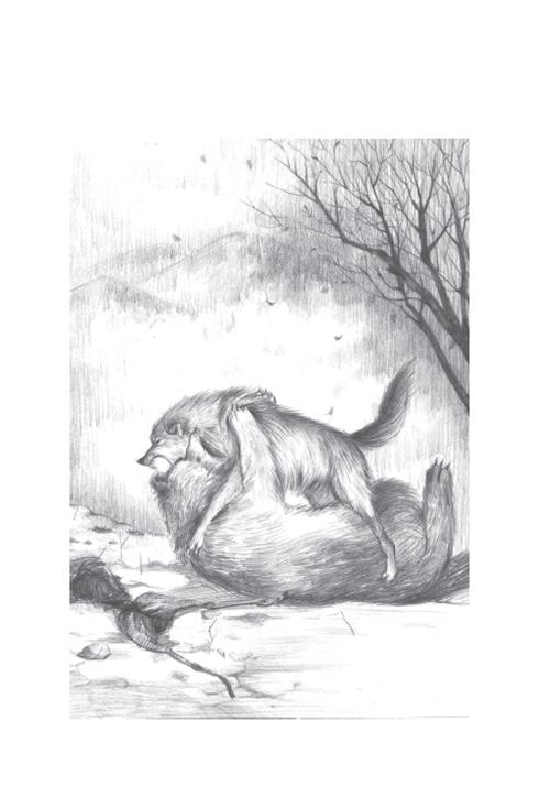 素描狼步骤图片