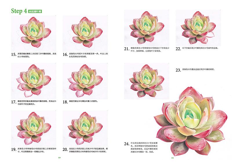 目  录 前言 第一章:奇妙的多肉 ·植物介绍 第二章:绘画工具 ·彩铅