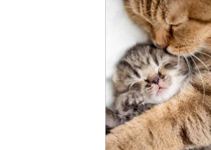 壁纸 动物 猫 猫咪 小猫 桌面 692_491