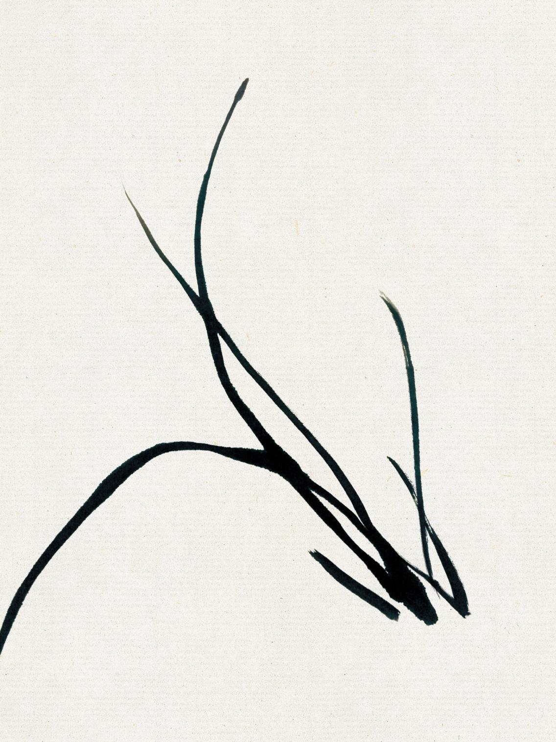 每日一画——中国画技法 兰花